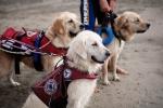 cani-soccorso-generica-biella24