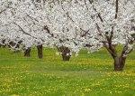 meli-in-fiore-generica-biella24