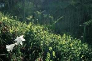 oasi-zegna-bielmonte-biella24