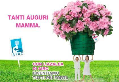 azalea_airc_festa_della_mamma