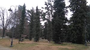 biella-zumaglini-alberi-nuovi-biella24