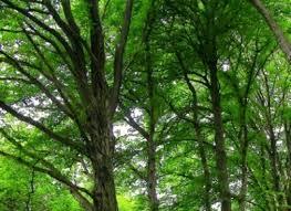 alberi-generica-biella24