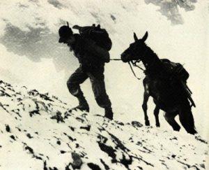 alpino-mulo-biella24
