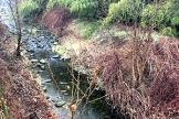 vigliano-corsi-acqua-sporchi-biella24-002