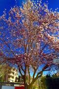 montoro-fioriture-2018-biella24-001