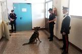carabinieri-controlli-scuole-cani-maggio-2018-biella24-002