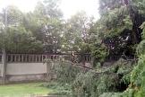 biella-alberi-caduti-agosto-18-biella24-002