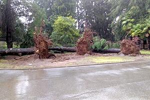 biella-alberi-caduti-agosto-18-biella24-003