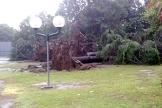 biella-alberi-caduti-agosto-18-biella24-004