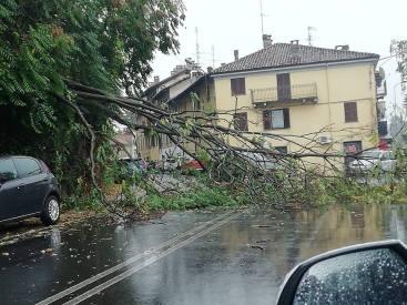 biella-albero-caduto-via-ogliaro-biella24