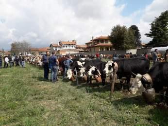 ponderano-27-festa-agricola-19-biella24-013