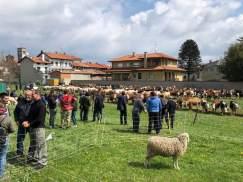 ponderano-27-festa-agricola-19-biella24-021
