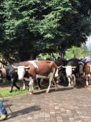 ponderano-27-festa-agricola-19-biella24-023
