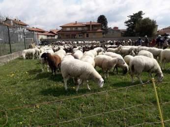 ponderano-27-festa-agricola-19-biella24-027