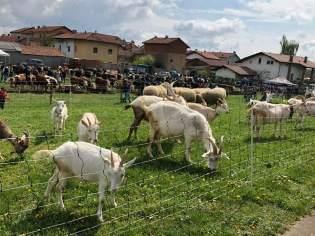 ponderano-27-festa-agricola-19-biella24-029