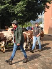 ponderano-27-festa-agricola-19-biella24-030