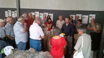 Nigel con pecore e pubblico